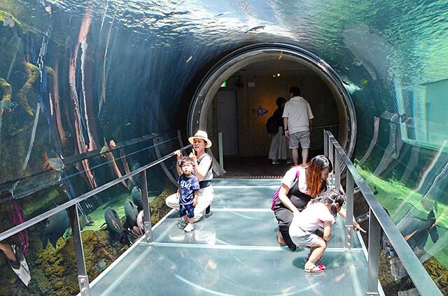 アマゾン川を再現したチューブ型トンネルの巨大水槽
